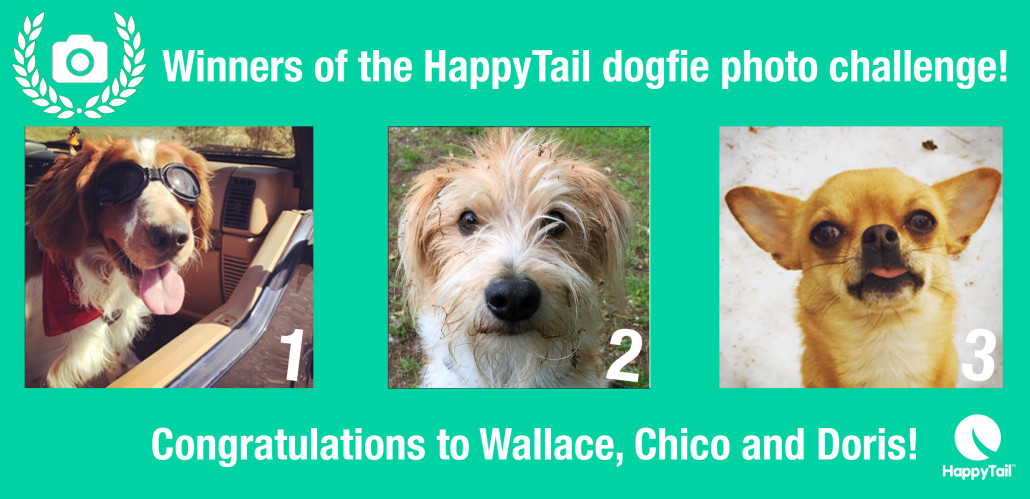 HappyTail Dogfie Competition