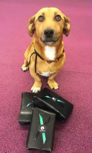 Rufus HappyTail officedog