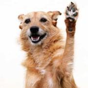aktivera hunden happytail