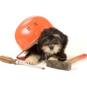 dog-and-tool-00