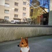hundfrisör.jpg_doggistyle